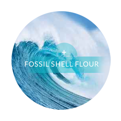 fossil-03