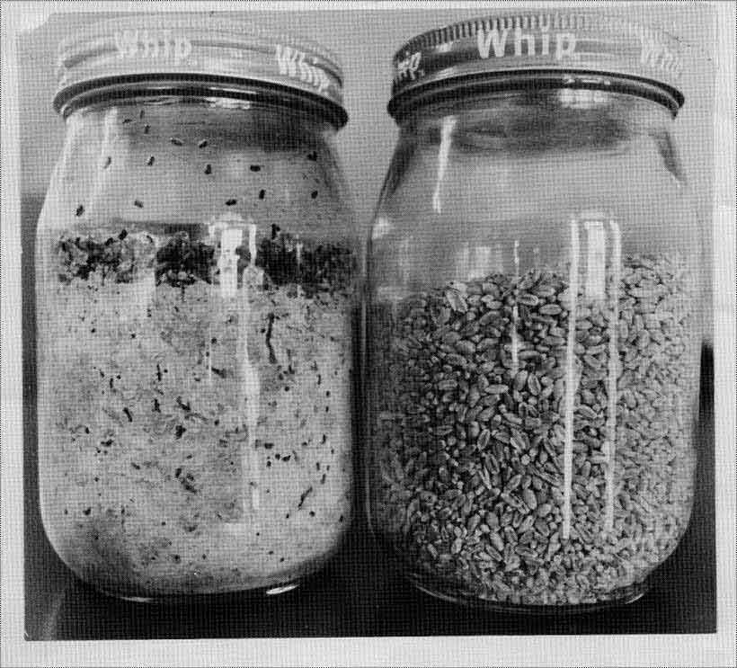 jars_with_stored_rice